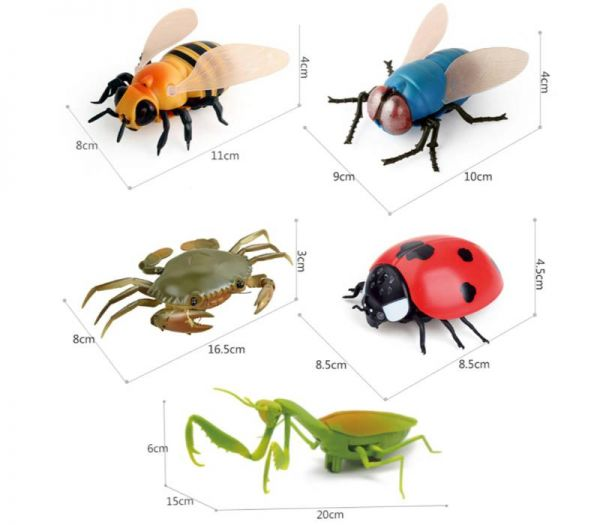 rc insects dimensions