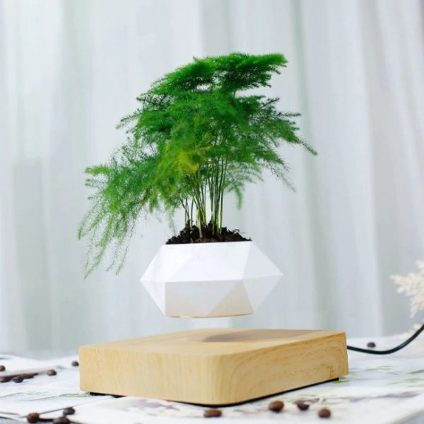 Magnetic floating Bonsai plant with pot that is totally in the air