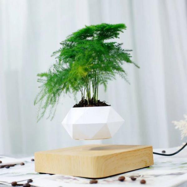 Magnetic floating Bonsai small tree with pot