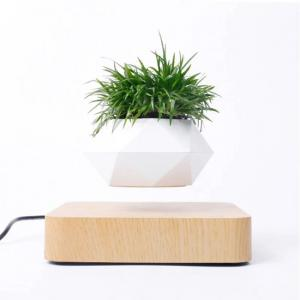 Magnetic floating Bonsai plant